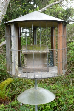 Bird Feeder in Housing
